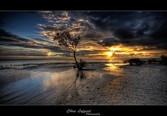 The Special Tree (Christolakis) Tags: tree sunrise special soe hdr wellingtonpoint sigma1020 6exp canon400d