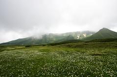 裾合平から当麻岳の稜線を見上げる