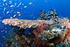 A glass of fishes, please. (Lea's UW Photography) Tags: underwater redsea fisheye glassfishes tokina1017mm unterwasserfoto leamoser