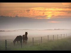 Mystic Horses (orvaratli) Tags: travel sunset mist green grass animal misty fog sunrise fence landscape iceland scenery farm eerie grassland icelandic suurland arcticphoto mystichorses rvaratli orvaratli