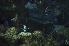 DSC_0291 (gildat20) Tags: spongebob sydneyaquarium