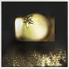 * (miu37) Tags: light star imaginary manualfocus 星 短歌 macro60mm lavueltaaldia nikond700 ruihayasaka 早坂 類 creamoffugu japanesepoem thanksdearsandra