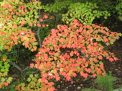 Small burst of fall color (Moores Springs, North Carolina, United States) Photo