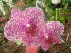 Orchid (Dina_90) Tags: pink autumn winter red sun white flower green nature beautiful yellow leaf purple utopia unforgettableflowerscontest36