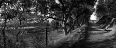 Rush Creek 8/2009 (Amanda Tomlin) Tags: noblex novato acros rushcreek