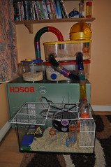 Doughnut's Cages (Niseag) Tags: pod tank tubes cage fishtank hamster wodentwheel rotastak