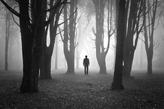 Alone in the Dark (Luís C) Tags: winter light mist tree fall nature rain weather fog forest dark movie season landscape twilight woods biosphere human videogame transition thesecretlifeoftrees