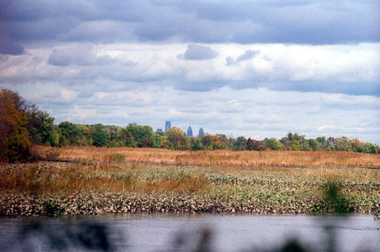 Marsh with Philly Skyline (Click to enlarge)