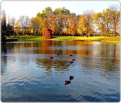 Autumn pond in Dresden (jackfre2) Tags: park blue autumn trees red orange brown green fall water leaves yellow reflections germany deutschland dresden pond colours ducks shades sachsen allemagne goldmedalwinner goldstaraward zwingerpark colorsculptures