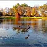 Autumn pond in Dresden