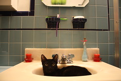 QB in the bathroom sink (Venessa Nina) Tags: black cat bathroom photography kitten sink qb nina blvd venessa quuens fivefootmohawk venessaninaphotography