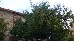 Montemarcello, Liguria (pinkiwinkitinki) Tags: liguria montemarcello