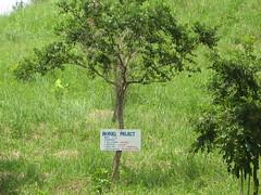 Biofuel project in Iba, Zambales