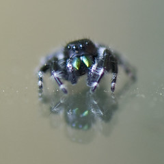 Spider and reflection (Katy Silberger) Tags: spider reflexions nikond60
