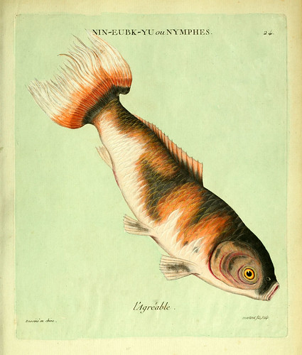 010-El agradable-Histoire naturelle des dorades de la Chine-Martinet 1780