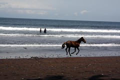 (laurajhirst) Tags: horse surf cameroon limbe semebeach