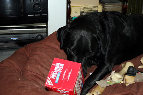 doggy fun with a cardboard box