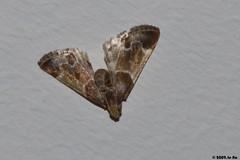 Papillon (Le No) Tags: butterfly aid papillon 31 hautegaronne midipyrnes lpidoptre stlon lauragais