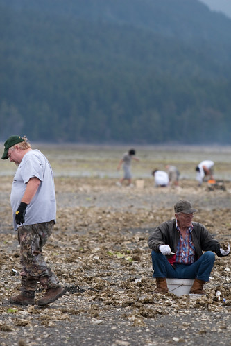 Clamming on hood canal