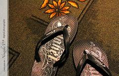 tsinelas (nongxky) Tags: flower carpet slippers tsinelas