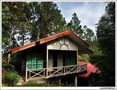 Perkasa Hotel Kundasang - House in the woods (sam4605) Tags: house building tree pine ed olympus highland malaysia chalet e1 sabah kundasang ranau zd sabahborneo 1260mm perkasahotel sam4605