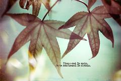 Take My Hand (Sachie Nagasawa - somewhair) Tags: plant green texture nature plante word leaf spring nikon sigma printemps vegetal sachie 105mm nagasawa 20fav d80 somewhair hantenshi