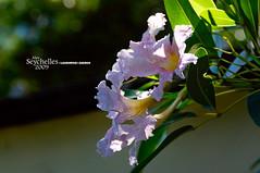 Flower (Dan & Luiza from TravelPlusStyle.com) Tags: resort seychelles banyantreehotel