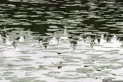 heinäkuu 08, 2009 4 (IlkkaL) Tags: vesi metsä pinta järvi heijastus eläinpuisto ähtäri asiat paikat lumpeet