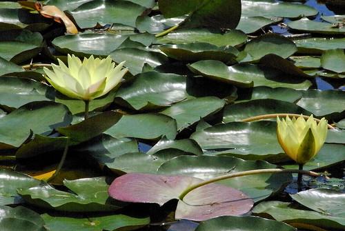 Flower-005