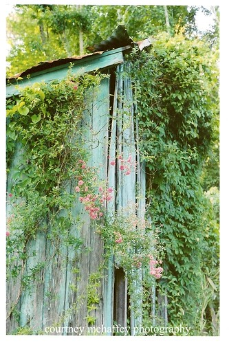 vertical vine shed