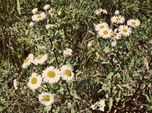 smflower029