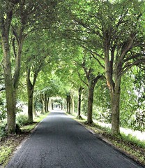 Road to nowhere (subsilk) Tags: road nowhere rgen allee