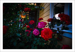 Rosor (Anders Mohlin) Tags: sverige sommar gnesta srmland lillasigtuna