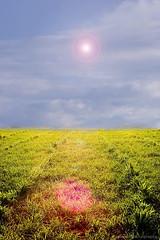 A Dream Land (TheZionView) Tags: copyright india grass photoshop prime nikon gimp nikkor dreamland tryout tamilnadu 50mmf18 cs3 hosur postprocessing d40 rawconverter iloveindia prabeesh thezionview vetorama prabeeshphotography indiaacountryfulloflife supernovap