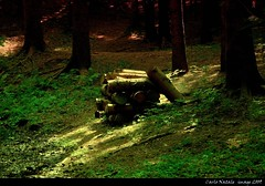 Light in the wood - 23 (cienne45) Tags: wood friends light italy cienne45 carlonatale natale fiatlux