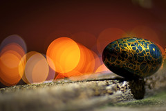 Egg On A Ledge (michaeljosh) Tags: moss dof bokeh egg ledge nikkor50mmf14d project365 paintedegg nikond90 woodenegg happybokehwednesday michaeljosh