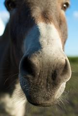 Ass...er, Donkey