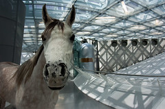 """I believe in the horse. The automobile is only a passing phenomenon"" (iPhotograph) Tags: horse architecture germany geotagged stuttgart fisheye tokina badenwrttemberg stuffedhorse mercedesbenzmuseum 1017mm geo:lat=4878820526833906 geo:lon=9233847935996252"