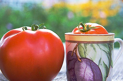 tomatoes-big-small.jpg