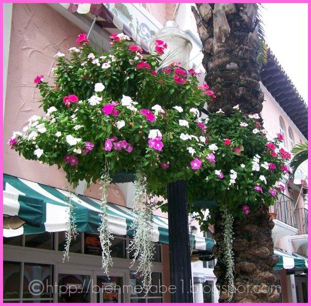 florecitas aereas