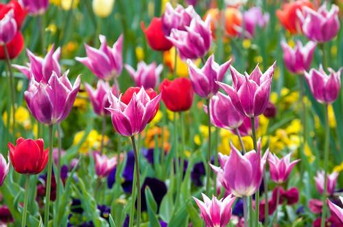 Spring has Sprung 92/365