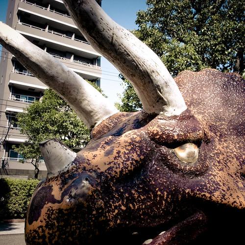 Triceratops in Nishi Kasai