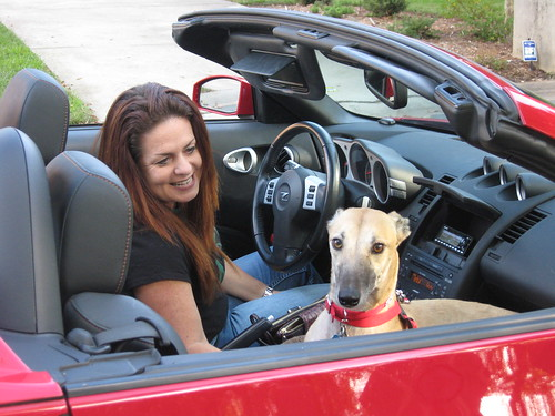 Grace, the rescued greyhound is looking pretty cool in this car.  She is one lucky girl!