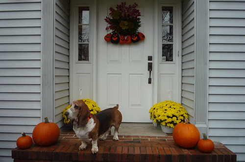 house exterior with Basset
