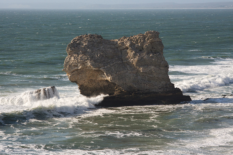 Rock, Ocean, Birds