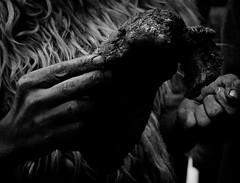 Fonni (Roberta Schneeweichen Nateri) Tags: school portrait man portraits photography photo hands nikon ray d mani 09 40 dicembre ritratti 2009 roberta cortes manray prove cortesapertas d40 fonni apertas nateri