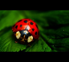 L U C K ? (remography) Tags: red color macro green rot photo nikon foto symbol d70s luck ladybug grn makro tamron farbe marienkfer reverselens glck twtme