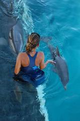 Andrea training dolphin (ABC Dolphin Trainer Academy) Tags: dolphin cancun trainer trainingsession dolphindiscovery animaltraining dolphintrainer positivereinforcementtraining entrenamientorefuerzopositiva entrenadordedelfines