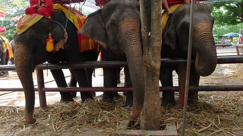 thre  elefants