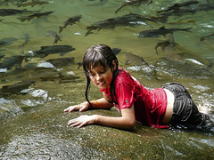Samantha between fishes (Bn) Tags: thailand trat backtonature luckyme amazingthailand namtok chanthaburi plentyoffish waterresource splashingaround forestandjungle 3levelwaterfall torsoro cuveiervaleciennes namtokphliu phliu namtokphliunationalpark phliuwaterfall khaosabapmountianrange coolandclearwater refresingpools relaxingbythestreams